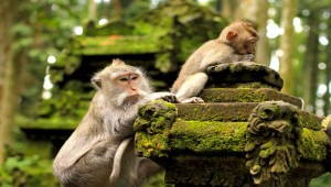monkey forest sanctuary,central,ghana,westafrica